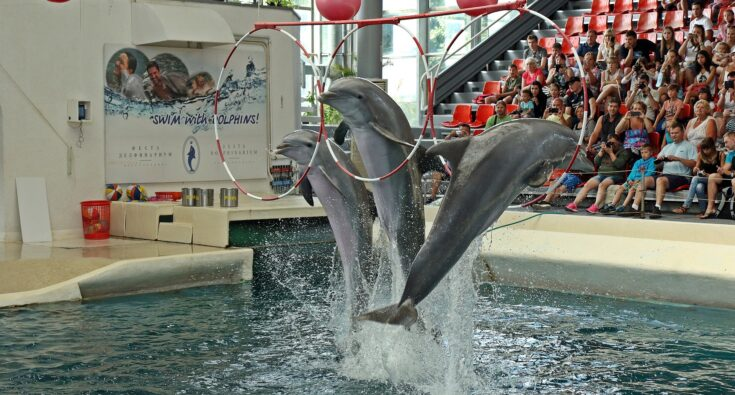 dolphins-1651975_1920